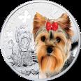 Yorkshire Terrier, 1 dolar