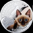 Kot syjamski, 1 dolar, Seria: Przyjaciele Człowieka – Koty